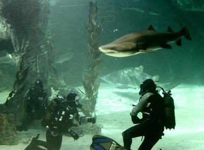Inmersión con tiburones en el Zoo Aquarium de Madrid