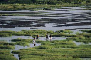 El lago de la brea, en Trinidad y Tobago.