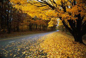 Una de las carreteras que permiten recorrer los paisajes del parque Nacional de Shenandoah, en Virginia.