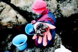 Una percebeira faenando en la costa gallega.