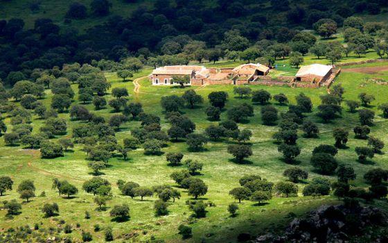 Paisaje de la dehesa en el valle de Alcudia, en Ciudad Real.