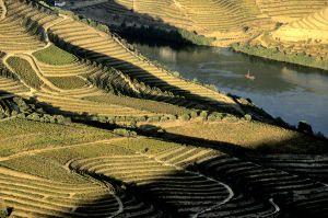 Terrazas de viñedos en Pinhao, en el valle del río Douro (Portugal).