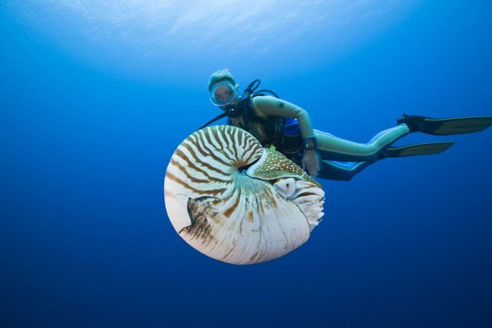 Fotos australia submarina el viajero el pa s for Caracol de jardin de que se alimenta