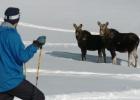 Esquiar en Canadá entre alces, ciervos y caribús
