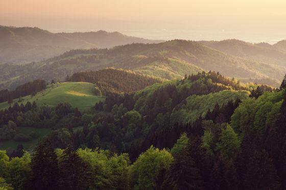 Por la verde Selva Negra