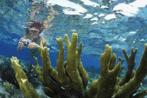 Buceo entre corales en la isla de Bonaire, en el mar Caribe.