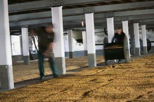 Secado de grano en una destilería de Laphroaig, en la escocesa isla de Islay.