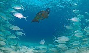 Una bañista ataviada como una sirena practicando snorkel en Filipinas.