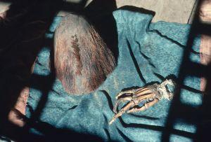 Restos pertenecientes, supuestamente, al Yeti, en el monasterio de Pangboche, en Nepal.