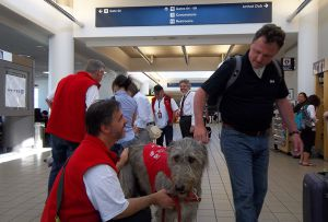 Terapia com animais no aeroporto de Los Angeles.