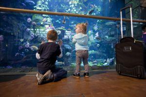 Niños en el gran acuario del aeropuerto de Vancouver (Canadá).