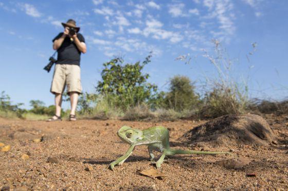 Un turista fotografiando un camaleón en el parque nacional de Kruger, en Sudáfrica.