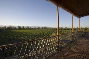 Un viñedo en Mendoza, Argentina.