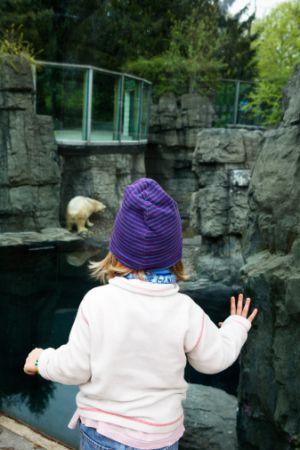 Una niña mira un oso polar en el Zoo de Nueva York.