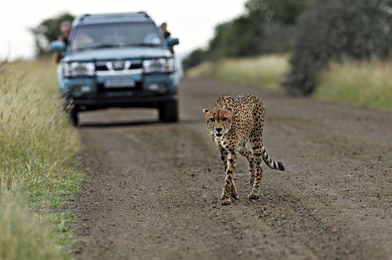 Safari por África.