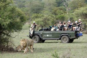 Varios visitantes observan dos leones en el parque Kruger.