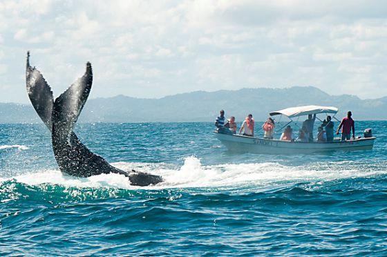 Ballenas en el Caribe