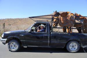 Vaqueros con dos caballos en su furgoneta en una carretera de Baja California cerca de Todos Santos.