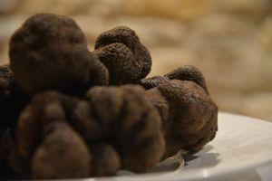 Trufas negras en la localidad castellonense.