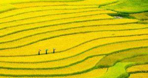 Bancales de arroz cerca de Sapa, al norte de Vietnam.