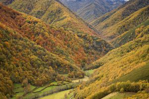 Las Tablizas lead to the natural reserve of Muniellos (Asturias).