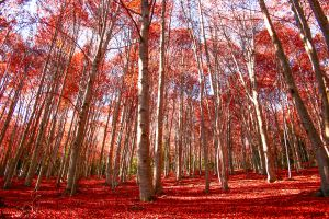 Striking reds in Montseny natural park (Catalonia).