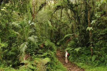 Senderismo en el parque nacional de Amistad, cerca de Boquete, en Panamá.