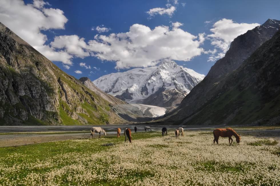 Cavalos pastando nas proximidades de Issyk-Kul, no Quirguistão.