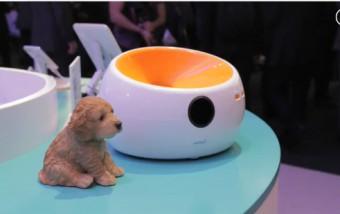 Gadgets para mascotas en el MWC