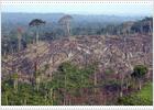 Brasil moviliza a su Ejército ante la destrucción del 27% de la Amazonia
