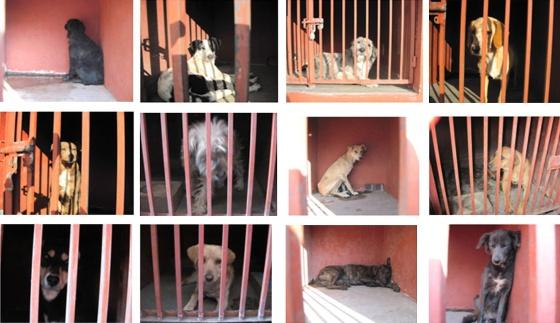 Imágenes de perros capturados en México DF.