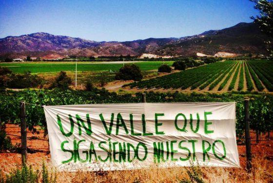 Vista de un viñedo en el Valle de Guadalupe.
