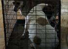 Bucarest declara la guerra a los perros callejeros