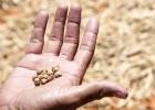 Latinoamérica desperdicia el 15% de los alimentos que produce