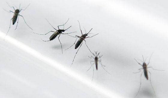 Puerto Rico declara la epidemia del virus Chikungunya, propagado por mosquitos