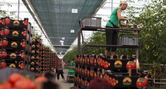 Una granja de tomates de Polonia.