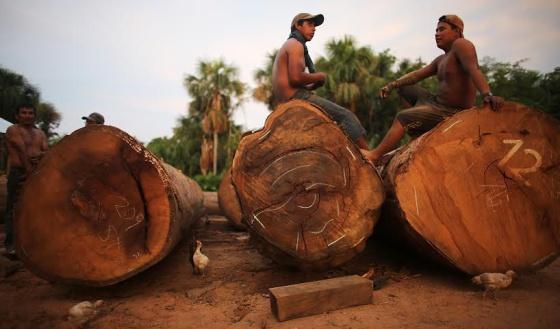 La deforestación afecta a la región Madre de Dios (Perú).