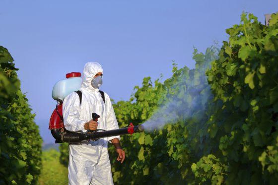 Un trabajador fumiga un viñedo