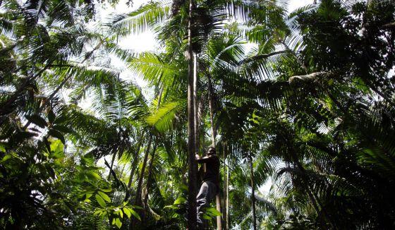 Imagen de la Amazonia brasileña.