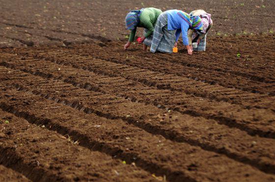 Agricultoras en Chimaltenango, Guatemala.