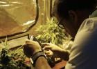 Uruguai esfria a legalização da maconha