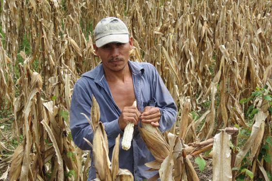 Pequeños agricultores de América Latina llegan a Wall Street