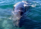 Un santuario de ballenas en el Pacífico mexicano