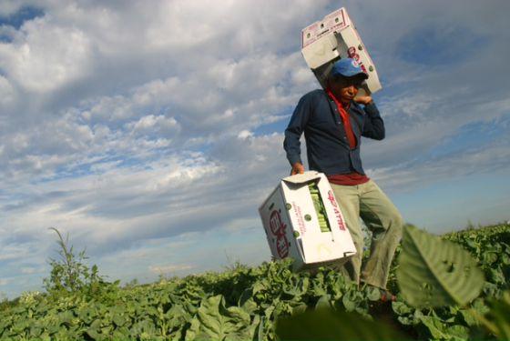 Los jornaleros de México: llenar un camión de naranjas por 12 dólares
