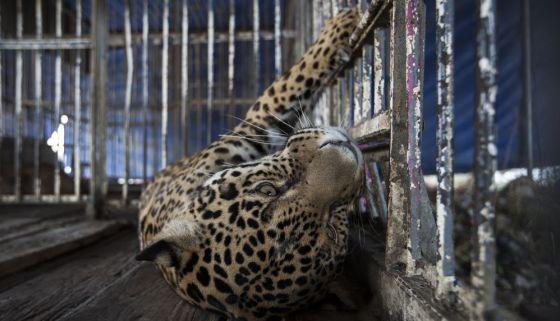 El circo en México, en la cuerda floja