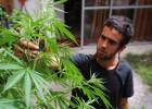 Chile avança na descriminalização da maconha