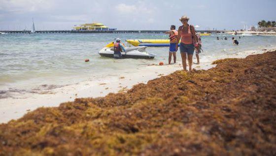 Las algas enredan al corazón turístico de México