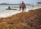 Seaweed invasion threatening tourism on Mexican coast