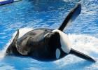 Sea World dejará de hacer espectáculos de orcas en San Diego