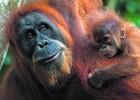 23.000 especies en peligro